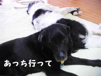 2009_0605_112114pic_01033