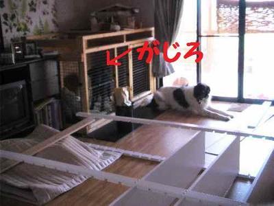 2009_0808_170655pic_0035