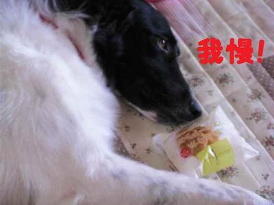 2009_0820_160820pic_0011