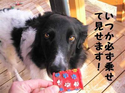 2010_0330_173948pic_00051
