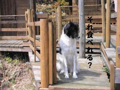 2010_0404_132852pic_00113