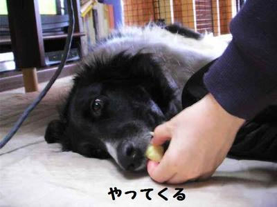 2010_0411_150516pic_00061