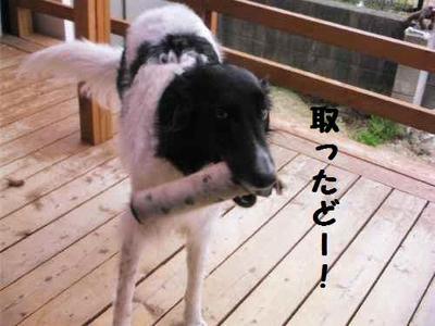 2010_0415_162306pic_0019