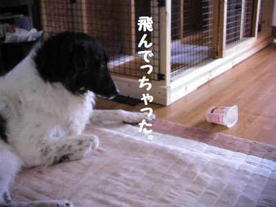 2010_0508_162201pic_00571