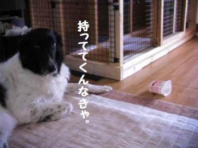 2010_0508_162209pic_00581