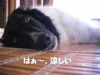 2010_0622_145949pic_00511