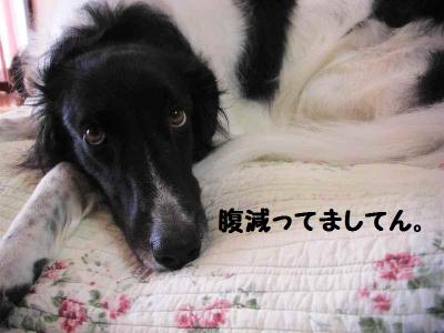 2010_1016_115610pic_00261