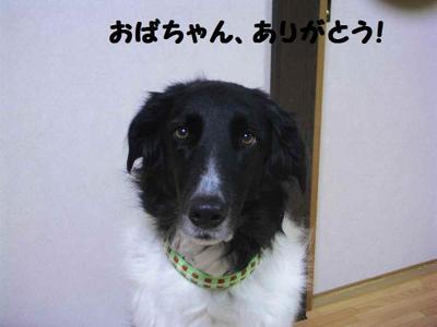 2011_0206_210145pic_00151