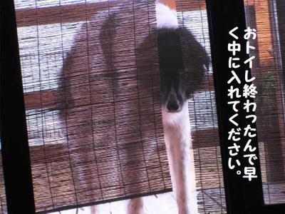 2011_0624_175928pic_00501