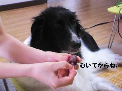 2011_0827_124444pic_00141