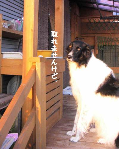 2011_1016_182441pic_0001121